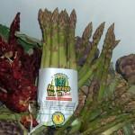 Asparago verde di Altedo (IGP)