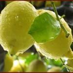 Limone di Siracusa (IGP)