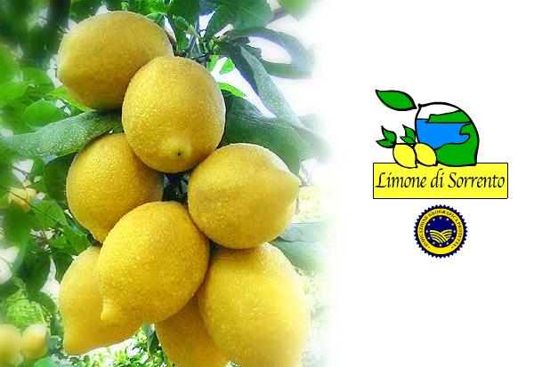 limonedisorrento