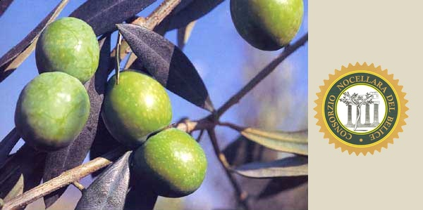 oliva-nocellara-del-belice