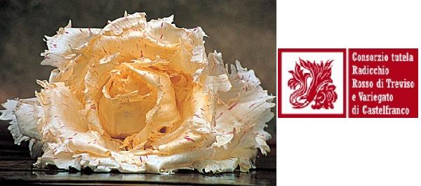 radicchio-variegato-di-castelfranco