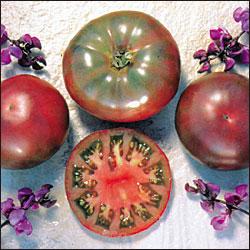 """Il rarissimo pomodoro """"Cherokee Purple"""", già coltivato dai pellerossa"""