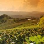 Le Langhe, Monferrato e Roero patrimonio mondiale dell'Unesco.
