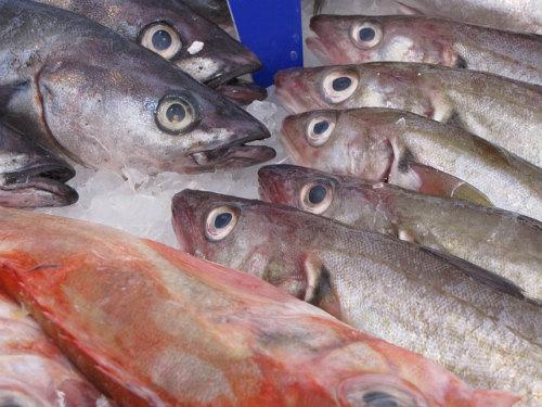 pesce_gustoso