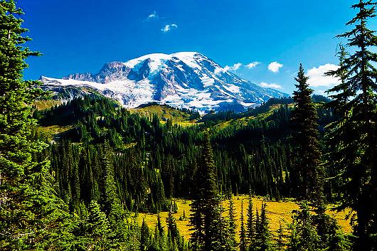 foresta_austria