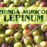 """Tutta la saggezza dei coltivatori dietro l'extravergine """"Lepinum"""""""