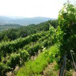 Azienda agricola Rossana Ruffini, qualità e vini da Oscar